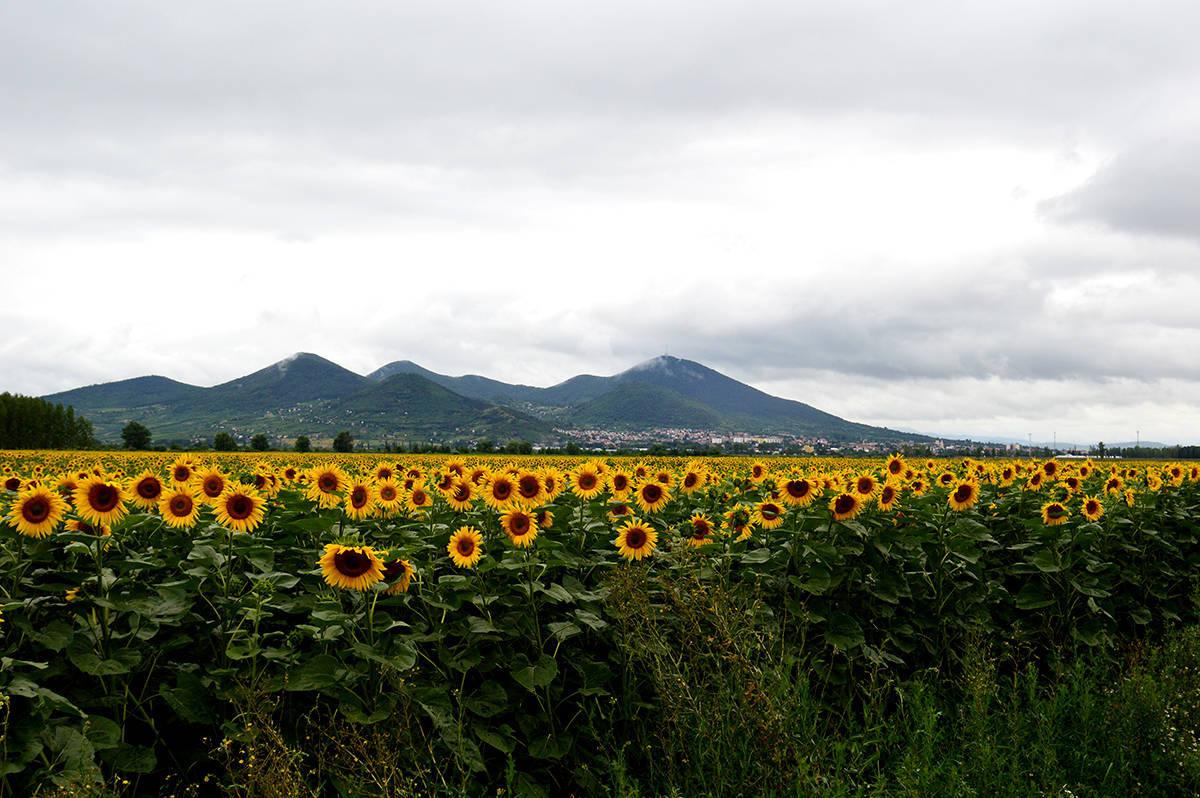 Singurul deal din Ungaria - îl ocolim