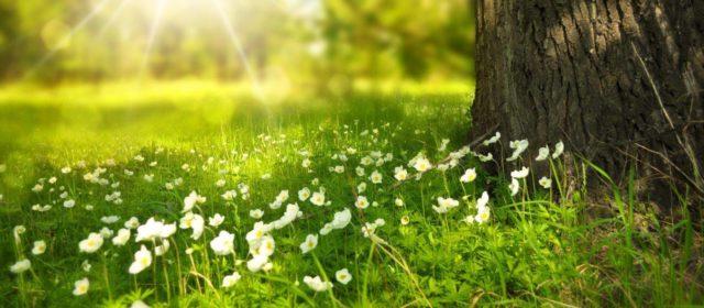 Hai, primăvară!